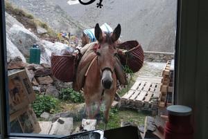 A Valdieri la presentazione del documentario 'A dorso di mulo'