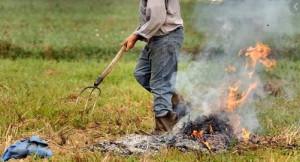 Bruciatura scarti vegetali: 'Finalmente qualcosa si muove'