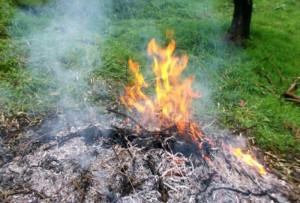 Abbruciamenti di residui vegetali: introdotta la possibilità di deroga nel periodo di divieto