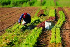 'Lavoro in agricoltura, stop alla catena dello sfruttamento'
