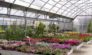 Consentita la vendita di piante e fiori in supermercati, mercati, punti vendita e vivai