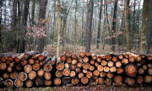 'Taglio dei boschi, serve una proroga del silenzio selvicolturale fino a fine giugno'