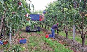 'A breve si porrà la questione dei lavoratori stagionali della frutta, facendo emergere problematiche sanitarie e sociali'