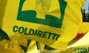Coldiretti: 'Avanti con la difesa dei marchi italiani dallo shopping straniero'
