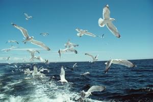 Corri con ERICA... Save the oceans!