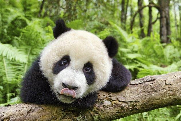 BBC超萌紀錄片,38種動物的一天,原來這...