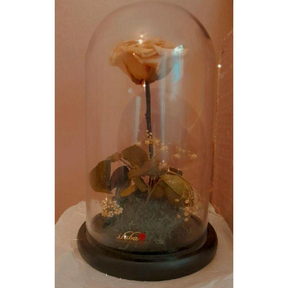 Dome de fleur iliuba 27 cm hauteur