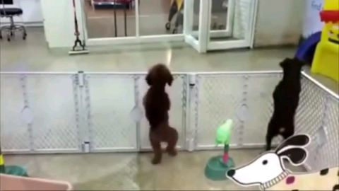 Doggo got the Moves!