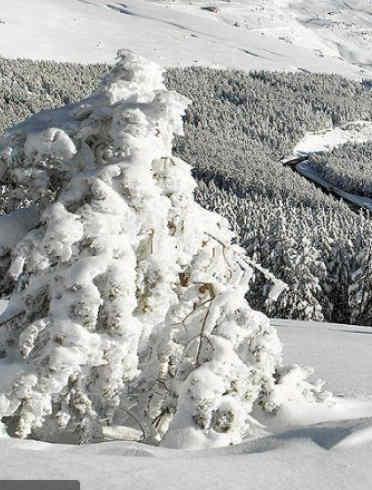 Actividad con Nieve, Fenómeno geológico, Invierno, Congelación, Árbol, Helada, Hielo, Forma de relieve glaciar, Terreno, Planta