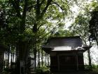 三柱神社 ケヤキ