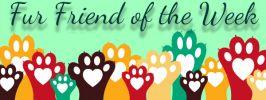 fur friend of the week tile.jpg