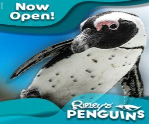 Penguin Web 320x250.jpg