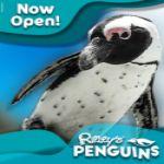 Penguin Web 125x125.jpg