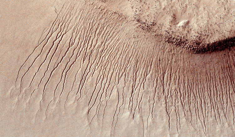A plethora of gullies on the surface of Mars