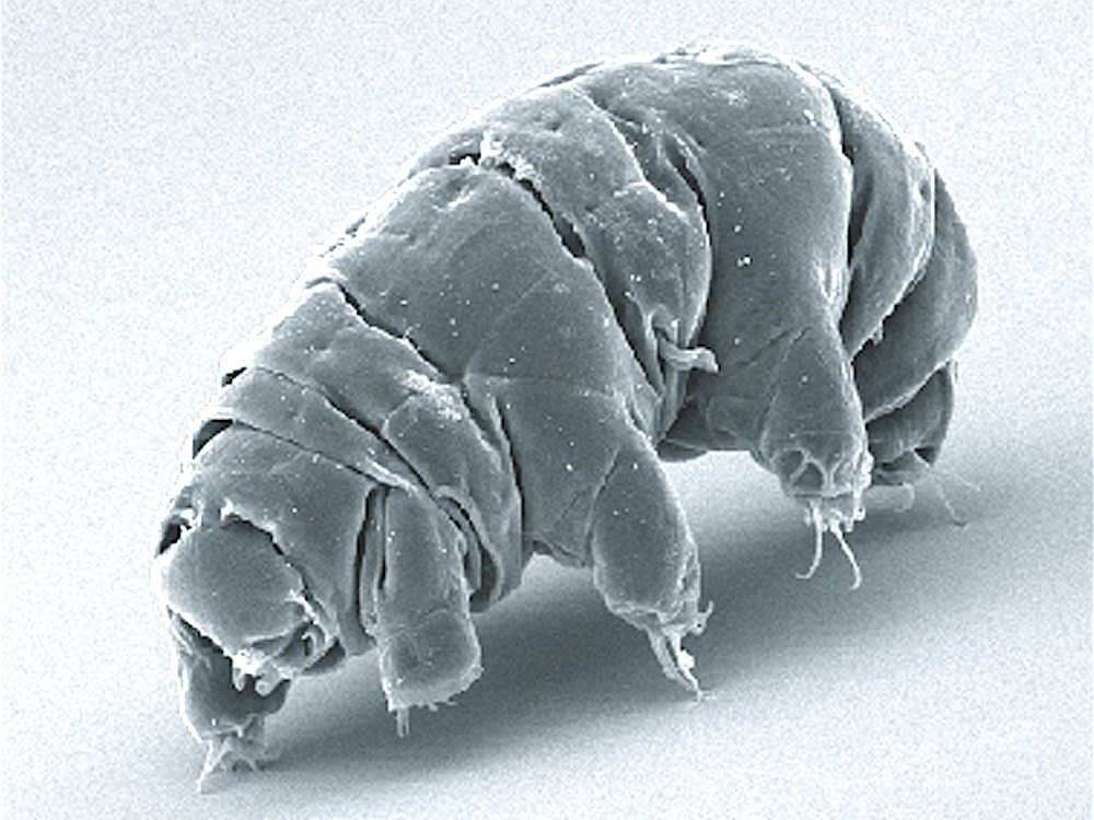 Tardigrade microscope