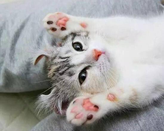 觉得融化!洗手乳挤出来的泡泡,竟然是超可爱的猫掌和米奇图案
