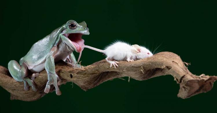 猎物当前!青蛙饥肠辘辘想吃小老鼠…下一秒「剧情神反转」网乐喊:太可爱