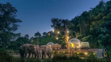 以不打扰的方式观赏大象!泰国度假酒店首创「雨林波波房」,夜晚望住星空入睡超浪漫~