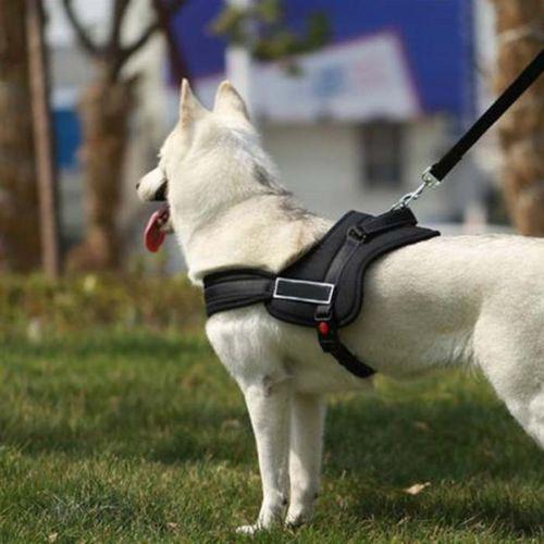 רתמה איכותית לכלב