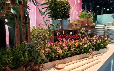 Blumen- und Pflanzenarrangements für besondere Momente