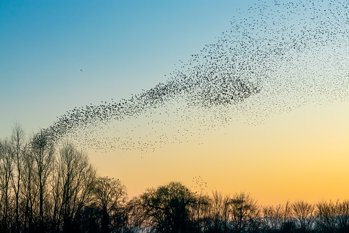Geospatial analysis: Tracking bird migrations in the Americas –image