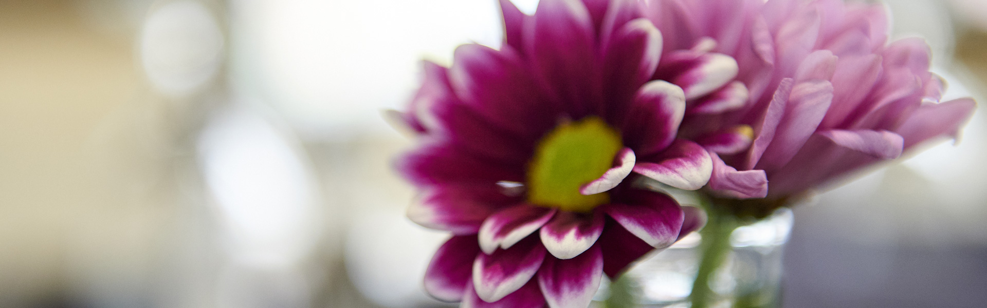 A purple and white flower