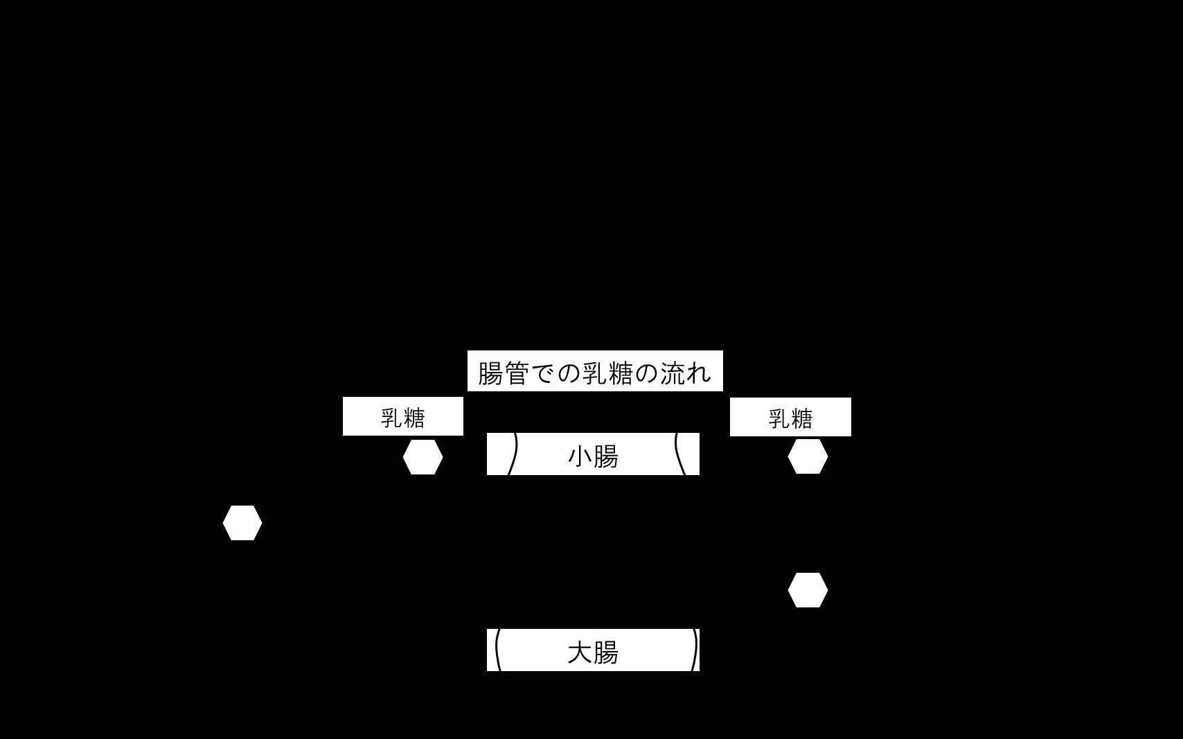 図:日本人における乳糖分解酵素の発現に関連する遺伝子型の割合