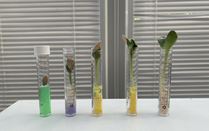 Grow your own pumpkin from a test tube in time for Halloween!