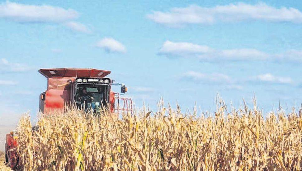 El maíz temprano tuvo rindes altos en toda la región núcleo.