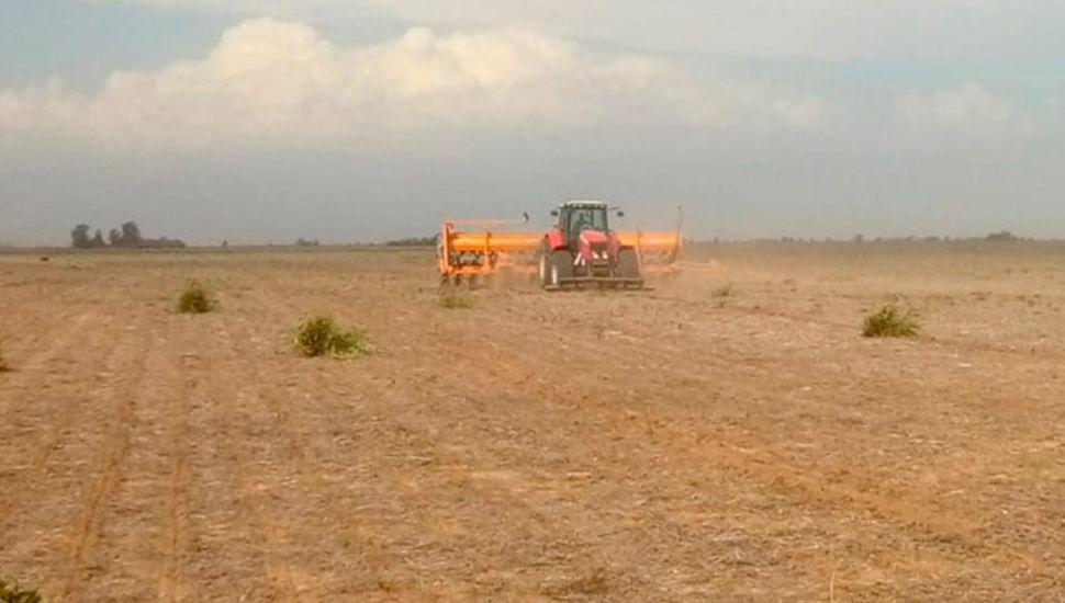 Renta agrícola: el 60,5 por ciento se lo lleva el Estado