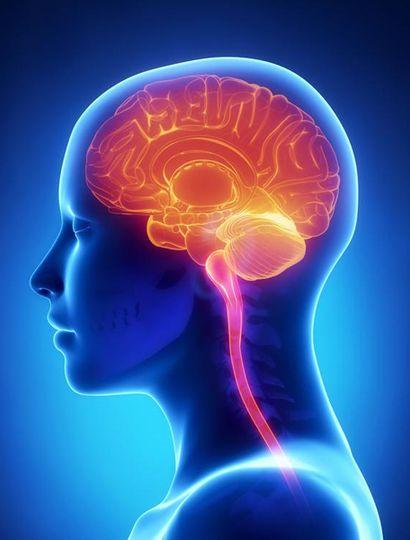 En los últimos años hemos sabido más sobre el cerebro que en toda la historia de la humanidad.