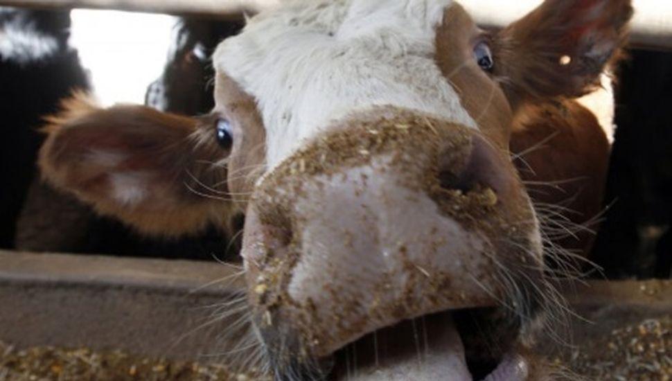 """Aseguran que un vecino de Rojas padece """"el mal de la vaca loca"""""""