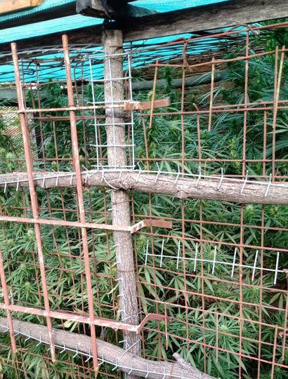 Las plantas se encontraban en una jaula.