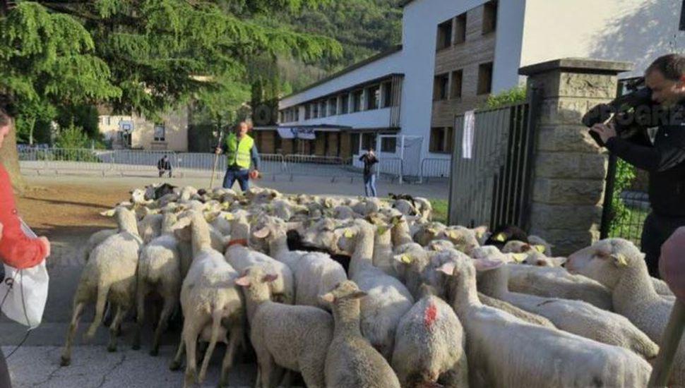 Para evitar el cierre de una escuela en un pueblo, inscribieron a las ovejas