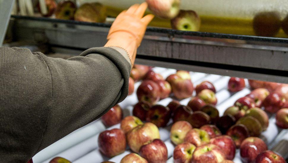 Intentos por revertir la suspensión de  exportaciones de peras y manzanas a Brasil