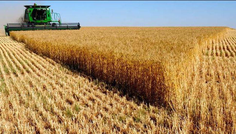 Estiman que la campaña de trigo 2019/2020 alcanzará un récord