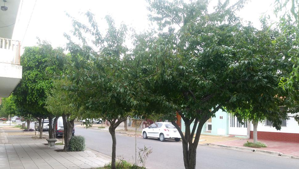 Los ciruelos en calle Gandini.