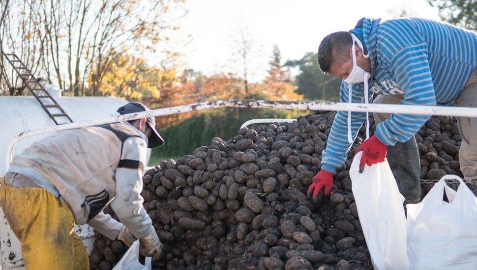 Reparten 30.000 kilos de papas a vecinos de Viamonte