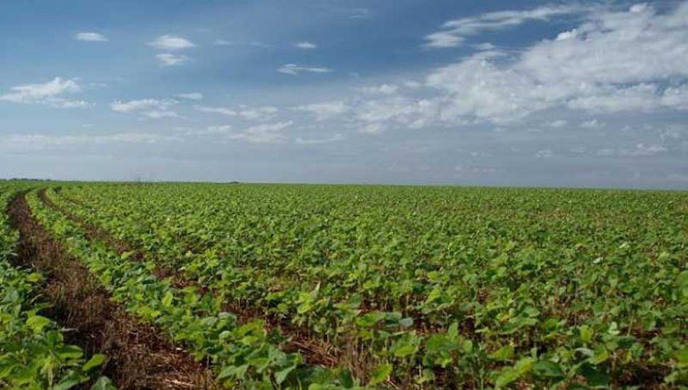 Del consumo total, el 52,8% obedeció a fertilizantes nitrogenados .