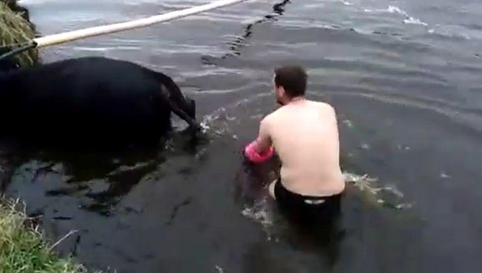 VIDEOS: Un veterinario de Los Toldos asistió un parto en el agua