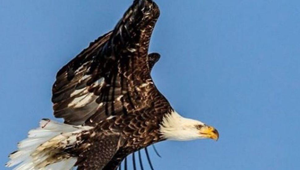 Naturaleza viral: la impactante foto de un águila sobre el agua