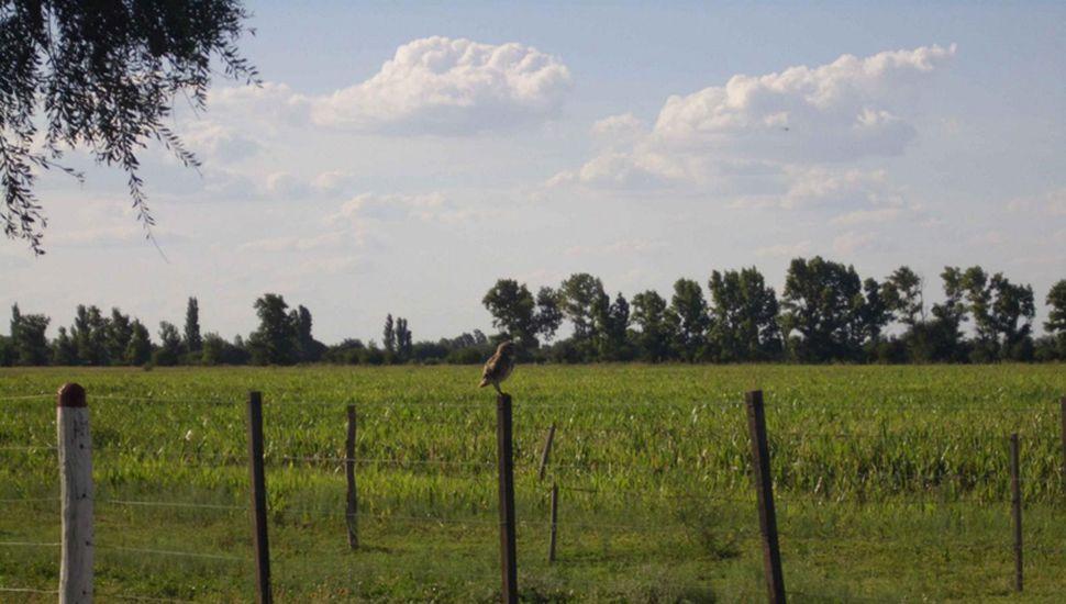 El campo se quejó por el aumento de 50% en el Inmobiliario Rural.