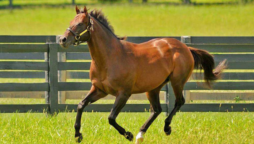 Candy Ride, primer caballo argentino en la historia que se alza con la estadística de padrillos en Estados Unidos.