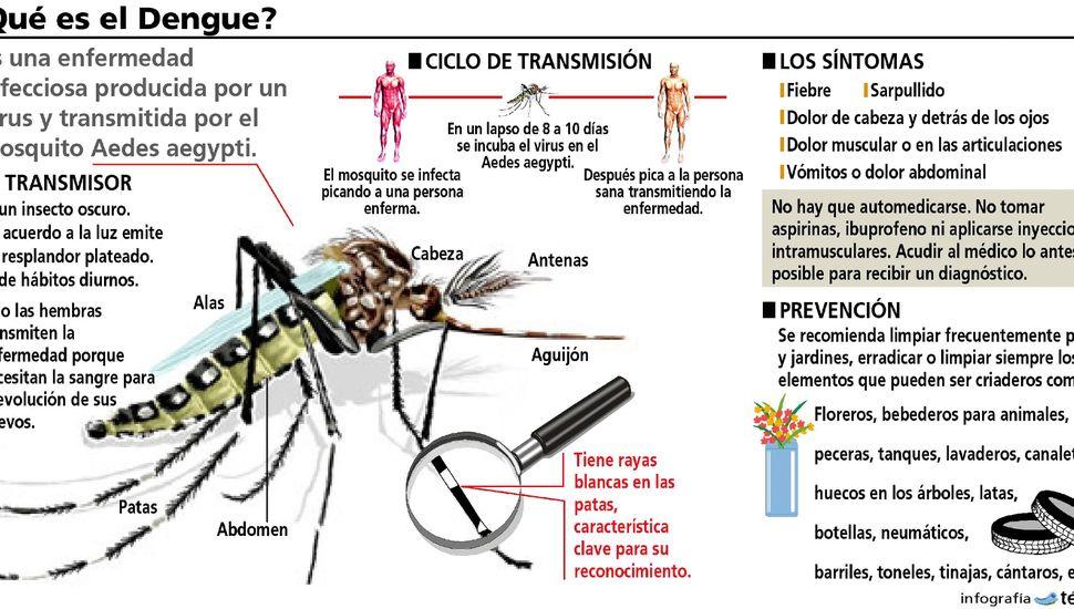 Dengue: se aguardan resultados de dos casos sospechosos en estudio