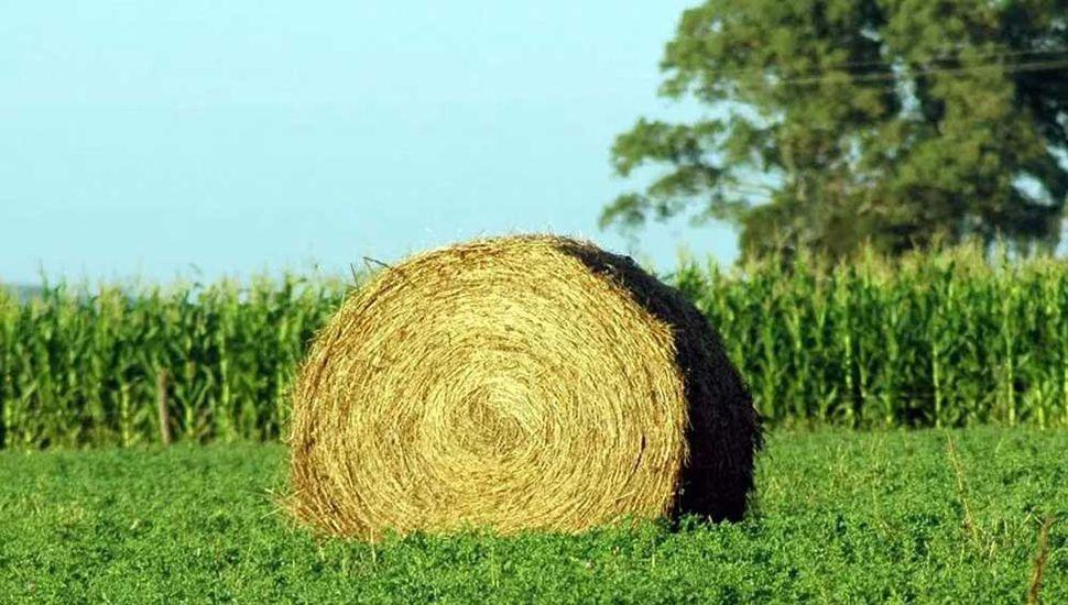 La alfalfa también tiene lugar en ambientes limitantes
