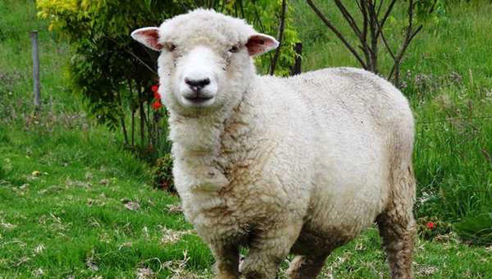 Mesa de fortalecimiento del sector ovino y pequeños rumiantes