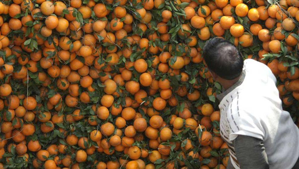 Buenas prácticas agrícolas:  necesidad en la hortifruticultura
