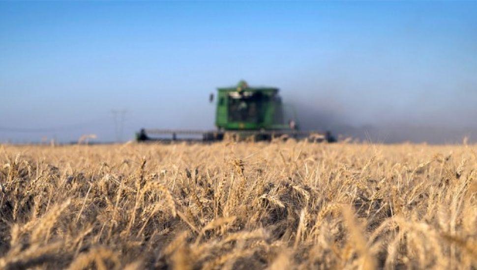 Estiman siembra  de trigo en 1,71 millón de hectáreas