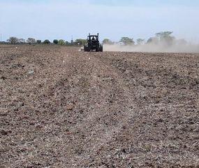 El área de siembra de maíz está en jaque por la falta de agua