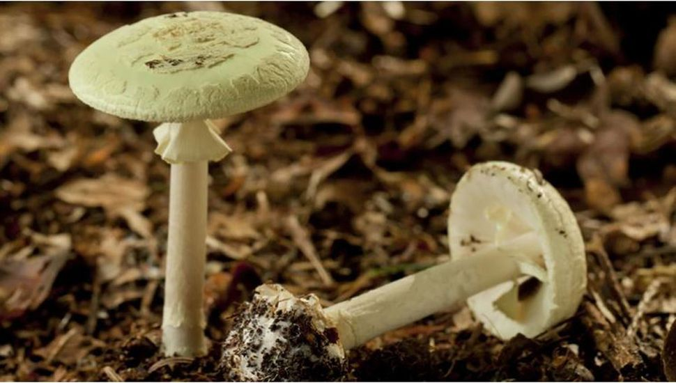 Murió por consumir hongos venenosos en las sierras cordobesas